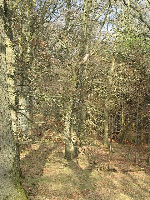 Garblie Wood