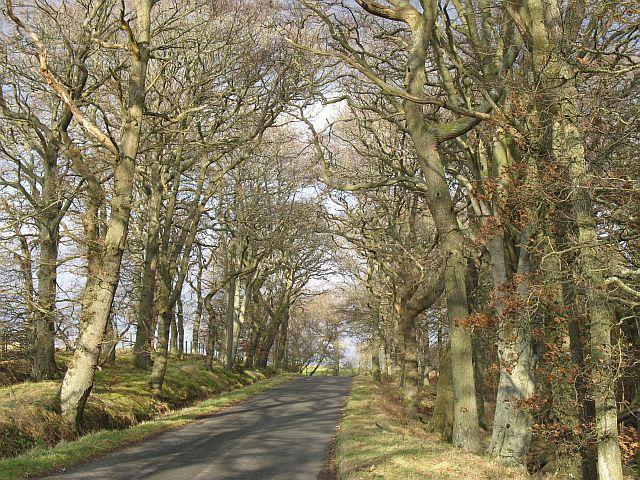 Garblie Wood