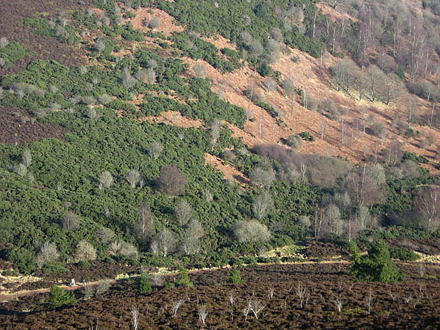 The lower southern slopes of Eildon Hill North