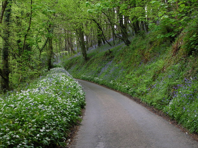 Lane to Treworgey