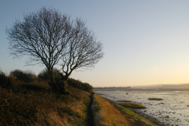 Tree and mud flats, Exmouth