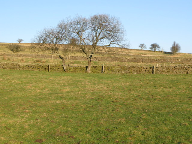 Pastures below Lea Hall (3)