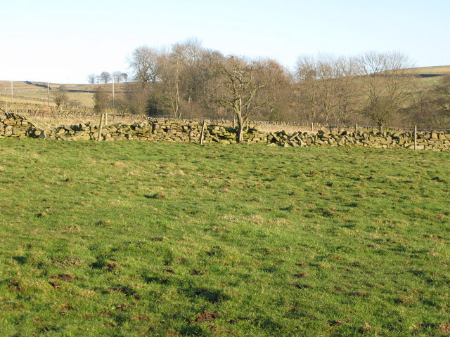 Pastures and woodland above Catton Burn