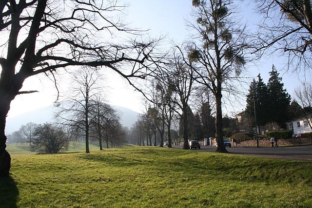 Double Row of Trees, Malvern Link Common