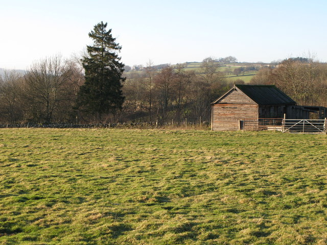 Pastures near Catton