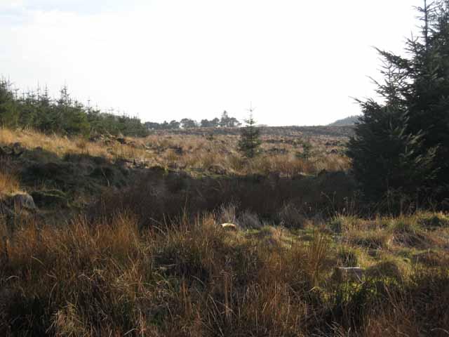 A corner of Kershope Forest