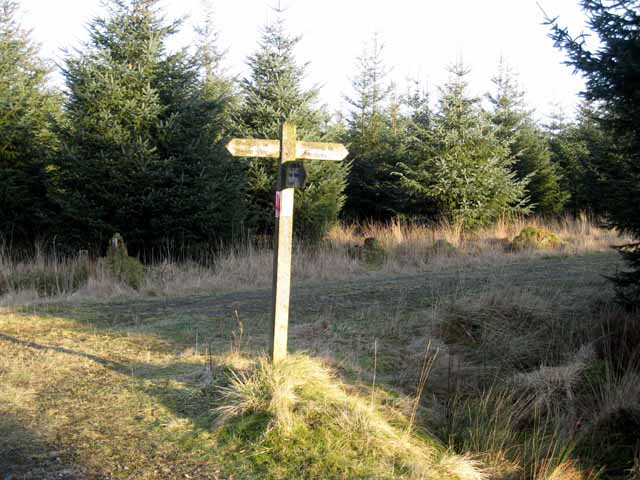 Signpost in Kershope Forest