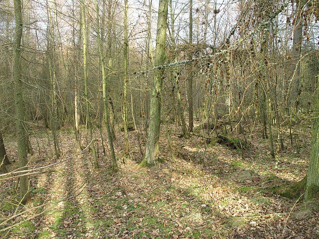 Woodland, Invermay