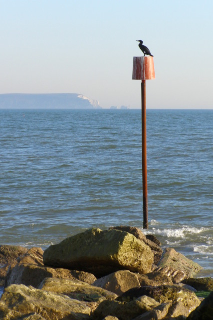 Cormorant on a post, Mudeford Spit