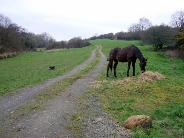 Field track and hungry horse