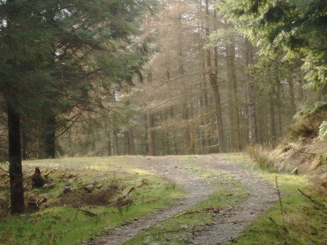 Forestry road in Troston Forest
