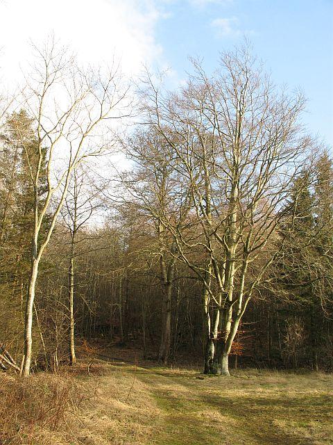 Hog's Wood