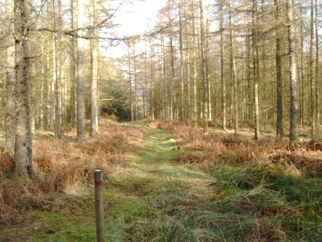 Trail in Troston Forest