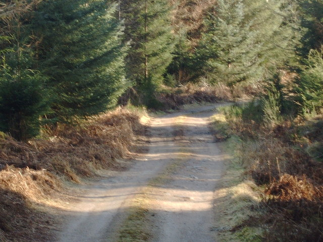Forestry road, Shambellie