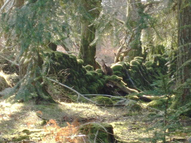 Old mossy wall through the forest