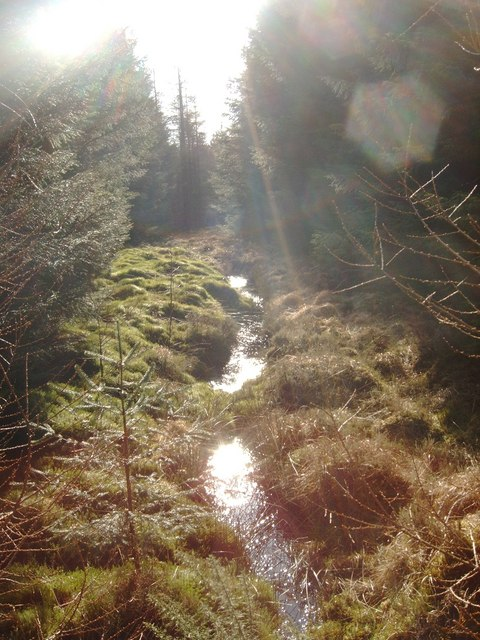 Burn in Troston Forest
