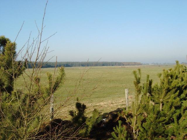 Pastureland between Racks Moss and Craigs Moss