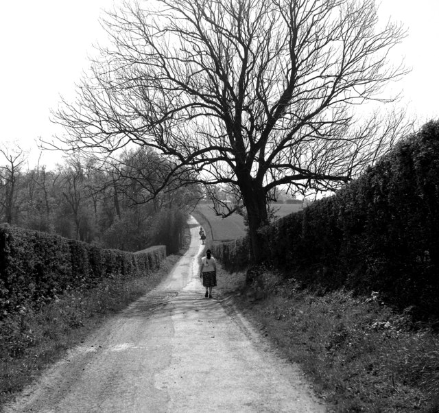 A Surrey bridleway