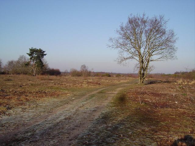 Heathland near Blackbushe Airport