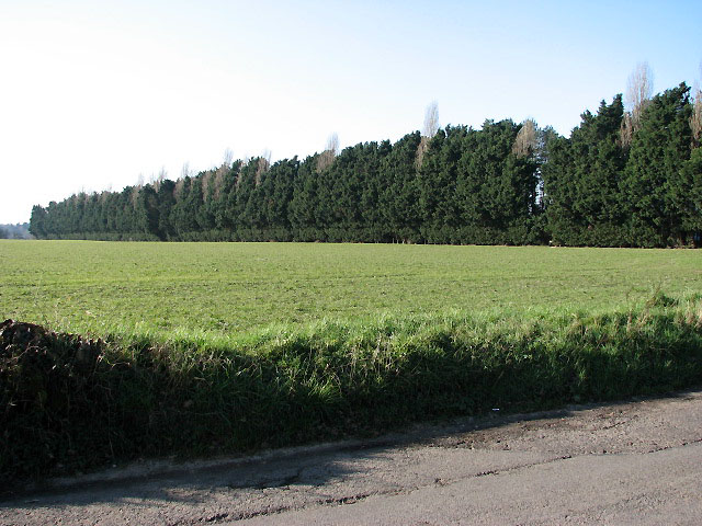 Belt of trees parallel to Waveney Drive