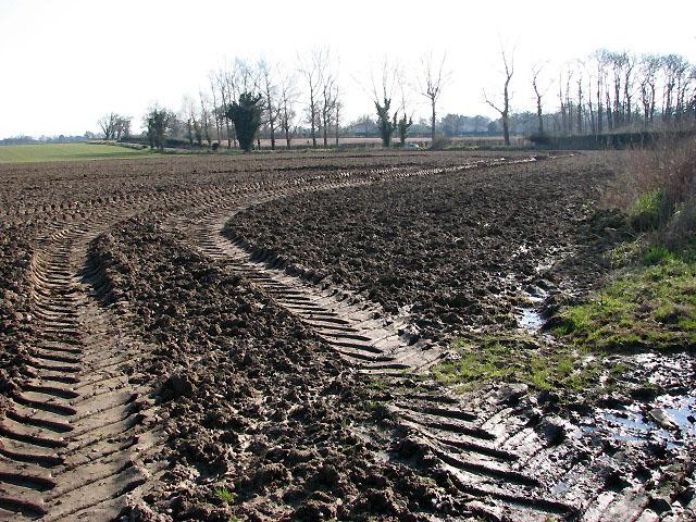 View across bare field