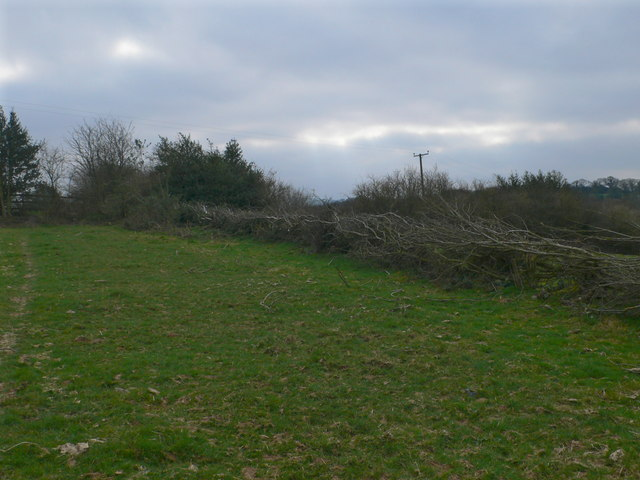 Recent  hedgelaying