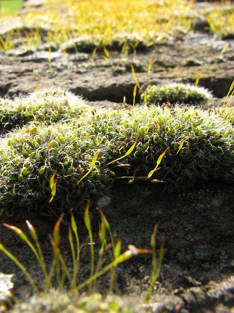 Moss on churchyard wall