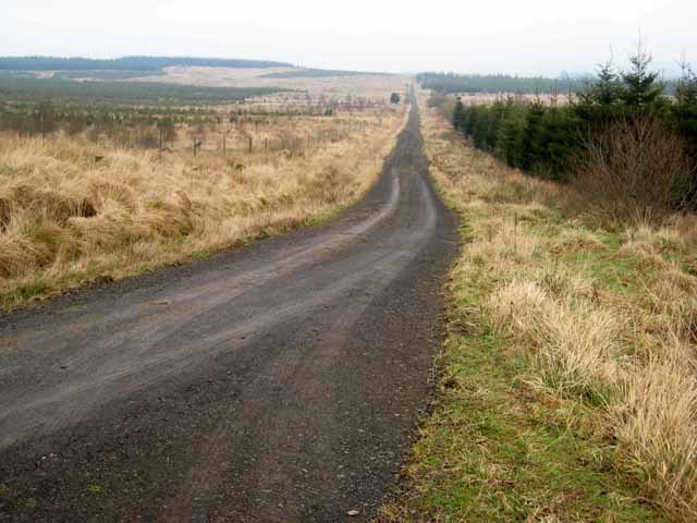 A straight road in Kershope Forest