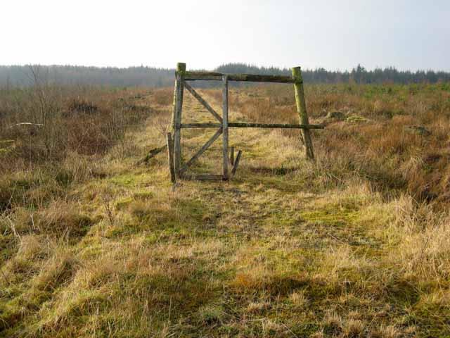 Deer proof gate in Kershope Forest