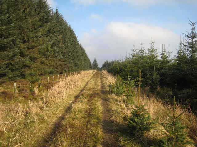 Forest road at Black Rigg