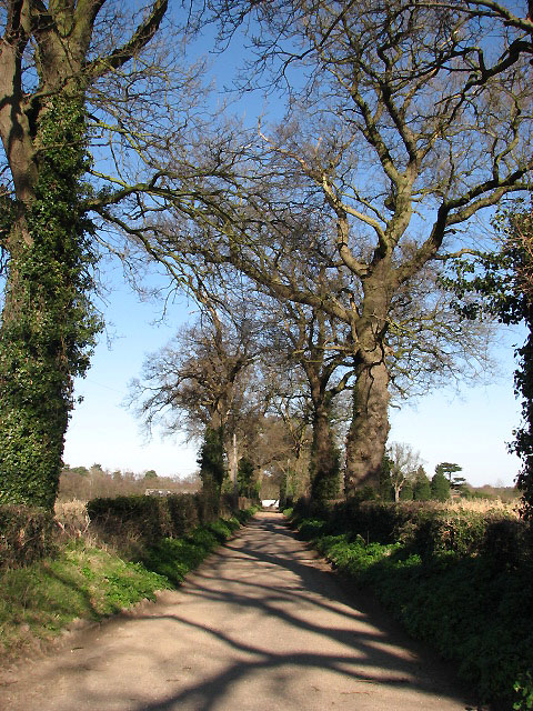 Treelined driveway to Grange Farm