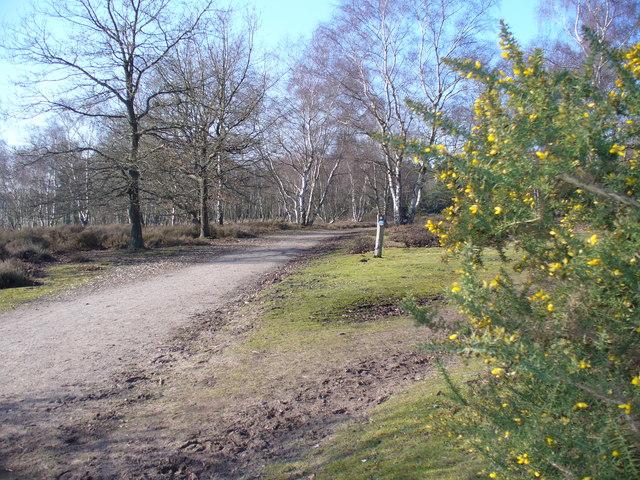 North of Ockley Common