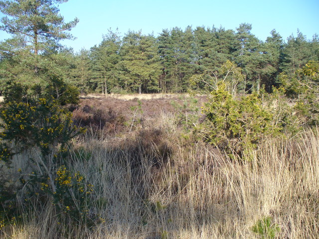 Elstead Common