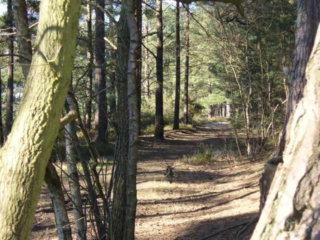 Bridleway on Elstead Common