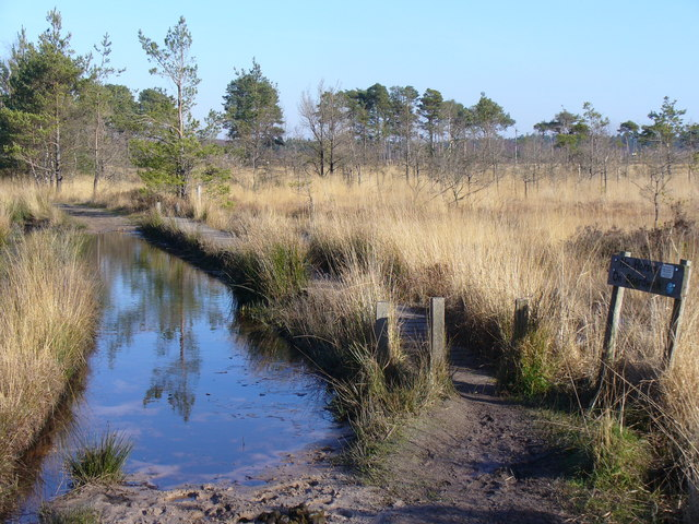 Bridleway on Thursley Common
