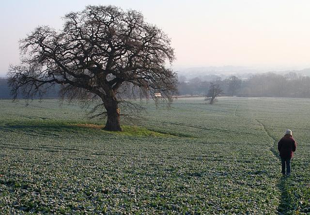 Path Through North Field, Little Malvern