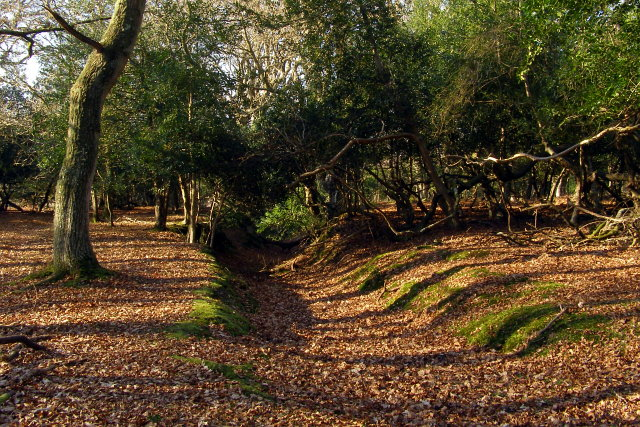 Eastern end of a hollow way, Ridley Wood, New Forest