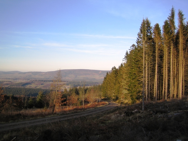 The slopes of Hill of Goauch in the Blackhall Forest