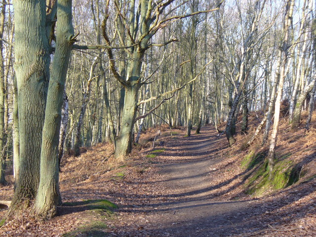 Greensand Way by Thursley