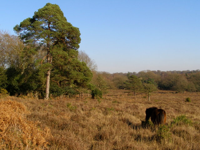 Heathland south of Ridley Wood, New Forest