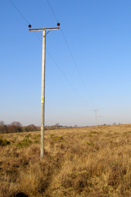 Power lines between Berry Wood and Ridley Wood, New Forest