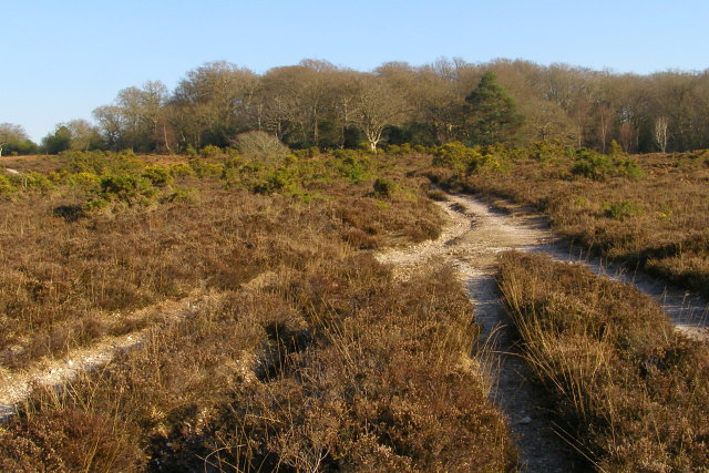 Approaching Berry Wood from the west, New Forest