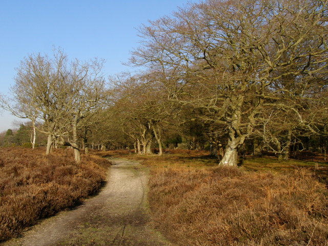 Path to Berry Beeches from Berry Wood, New Forest