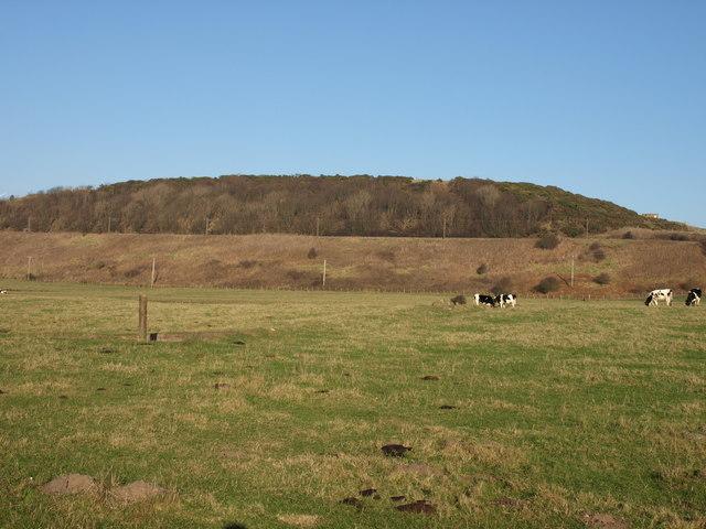 Pasture, Ardrossan