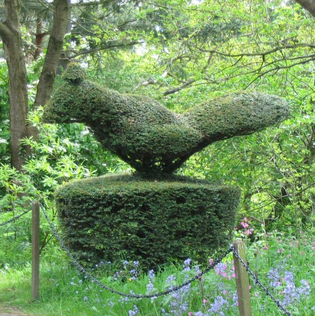 Yew topiary Chirk Castle