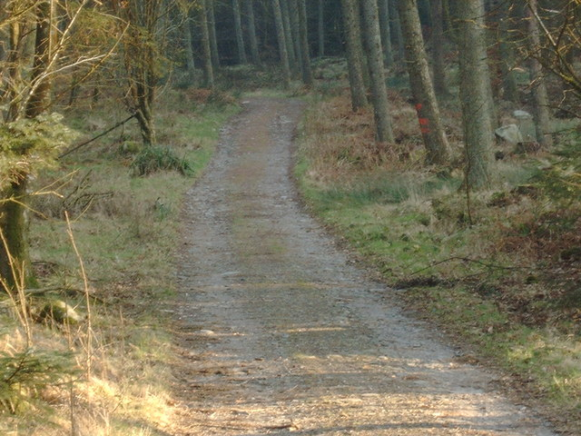 Forestry road near Troston Hill