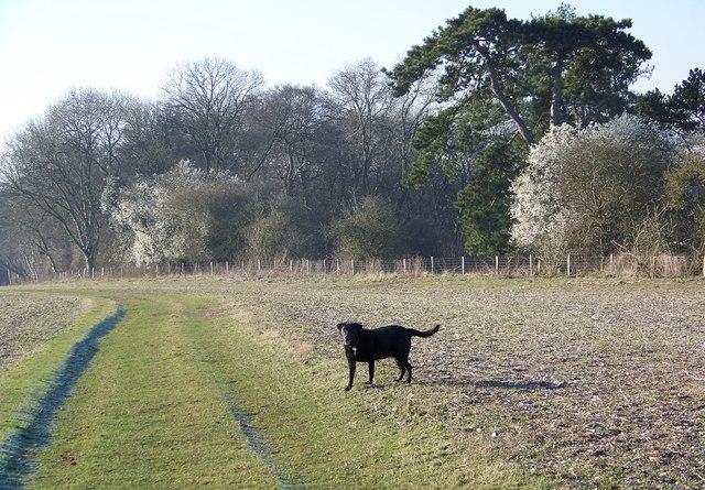 Bridleway near Little Durnford