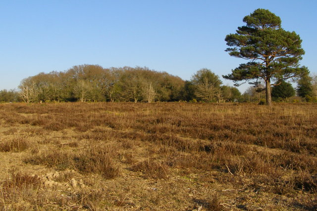Little Wood, Ridley Plain, New Forest