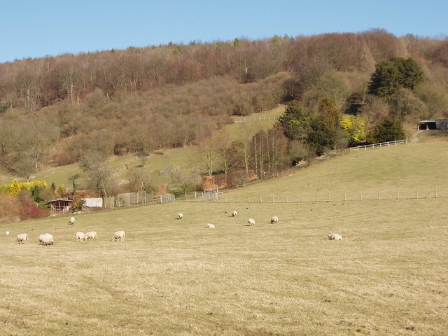 Hanger Wood above Manor Farm, Fingest