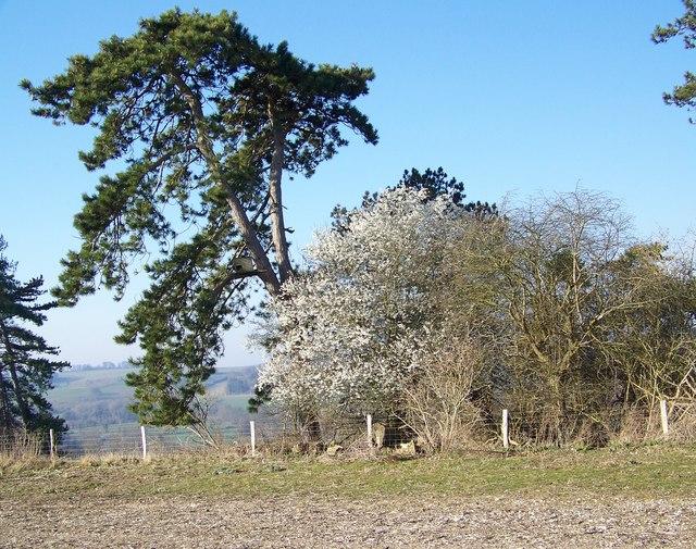Woodland near Little Durnford